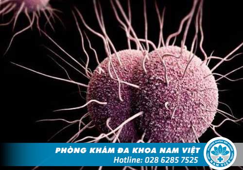 Dương vật chảy mủ có phải là bệnh lậu không?